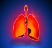 Lungs - Internal organs - blue background — Stock Photo