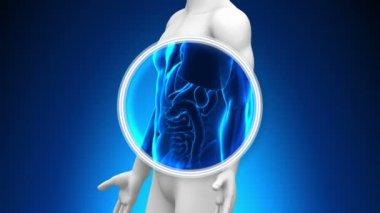 Scansione a raggi x medici - cistifellea — Video Stock
