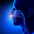 Sinuses - Breathing Human Anatomy — Stock Photo #41030855