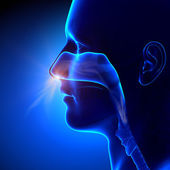 Sinuses - Breathing Human Anatomy — Stock Photo