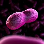 Yersinia pestis - czarna śmierć — Zdjęcie stockowe