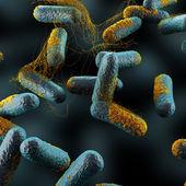 Clostridium Perfringens Bacteria — Stock Photo