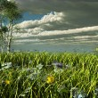 Stormy clouds over a green meadow — Stock Photo