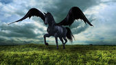 Fantasy winged horse — Stock Photo