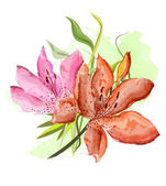 Flowers of a lily, water color — Stock Photo