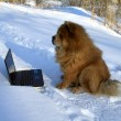 Dog and  laptop - Stock Photo