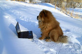 Dog and laptop — Stockfoto