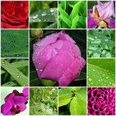 Blommor och blad med dagg — Stockfoto