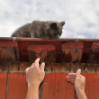 Cat on a roof — Stock Photo #18876151