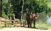 Elephants on rest — Stock Photo
