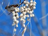 Bird on a branch — Stock Photo
