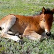 Foal on a grass - Stock Photo