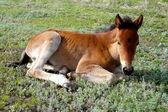フォウルの草の上 — ストック写真