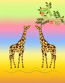Two giraffes — Stockfoto