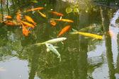 用装饰鱼池塘 — 图库照片