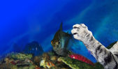 Cat's paw on an aquarium with a fish — Stock Photo