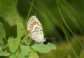 Grön bakgrund med fjäril — Stockfoto