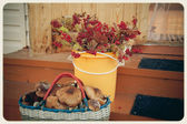 старинные фото, грибы и ягоды — Стоковое фото
