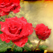 Beautiful card with scarlet roses — Stock Photo #28687271