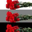 Bouquet of red carnations on a white, grey and black background — Stock Photo