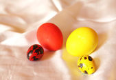 Pairs from different eggs of red and yellow color — Stock Photo