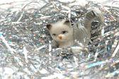 New Year Cat — Stock Photo