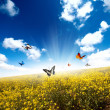 Yellow field with butterfly — Stock Photo