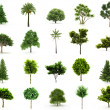 Perfect Group of Trees isolated on a white background — Stock Photo