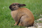Rabbit sitting in a meadow — Stock Photo