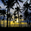 Sunset view through coconut trees - Stock Photo