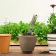 Three Clay Flower Pots in a Row — Stock Photo