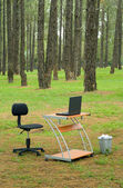 Office desk and laptop in forest — Stock Photo