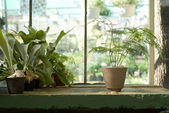 Potted Plants on Table in Greenhouse — Stock Photo