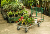 Nursery Plants For Sale — Stock Photo