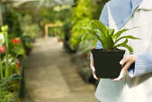 Holding Selected Plant in Hands — Stock Photo