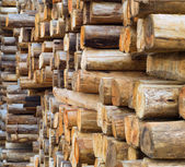 Dřevo v továrně skladu — Stock fotografie