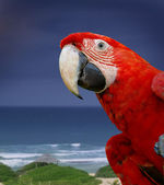 Green wing macaw parrot — Stock Photo