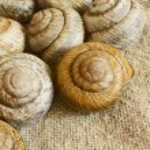 Snail shell. — Stock Photo #27770535