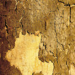 Texture background sycamore tree bark — Stock Photo