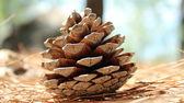 Natural Cone — Stock Photo