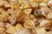 Physalis heap(altin cilek) — Stock Photo