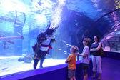 Aquarium Tunnel — Stock Photo
