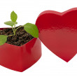 Love Grows Heart Shaped Box — Stock Photo