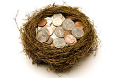 Nest Full of Money For Savings — Stockfoto