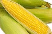 Corn Freshly Picked — Stock Photo