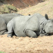 IndiRhinoceros — Stock Photo #24951043