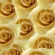 Foto Stock: Yellow roses background