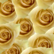 Yellow roses background — Stock Photo #38348885