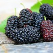 Sweet Black Mulberry  — Stock Photo #47406915