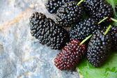 Sweet Black Mulberry  — Stock Photo